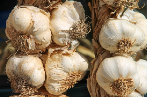 Česnek můžete sušit v sušičce, troubě nebo při pokojové teplotě.