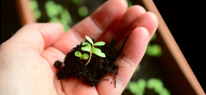 Tipy, Jak Zvládnout Klonování A Sázení Jako Zkušení Zahradníci