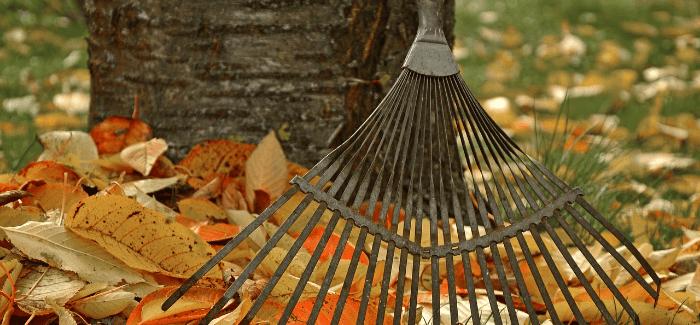 Tipy, Co Zasít Na Podzim A Sklízet V Zimě