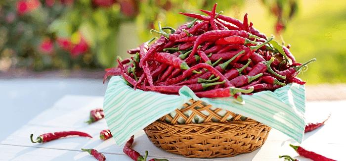 Zkuste Indoor Pěstování Chilli Papriček.