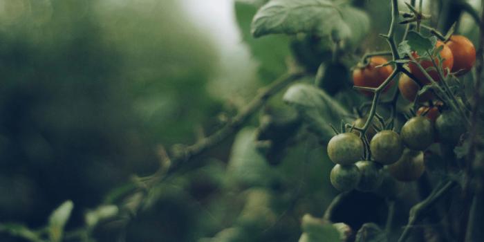 Jaká Je Cena Indoor Pěstování?