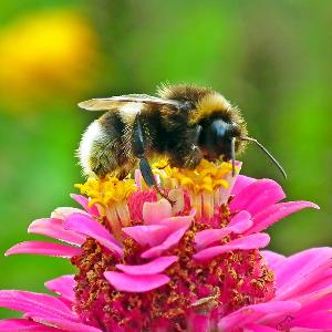 Včely se v uzavřeném prostoru neumí orientovat.
