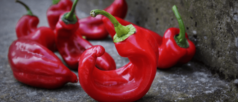 Jak Pěstovat Papriky.