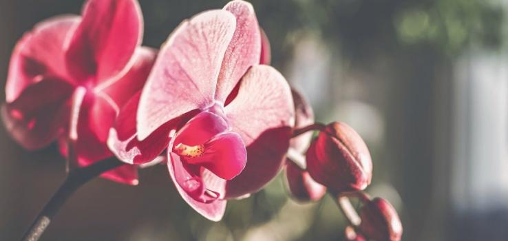 Jak Pěstovat Orchideje V Zimě.