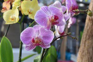 Orchideje nemají rády zimu.
