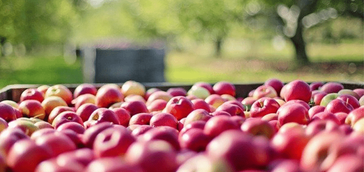 Kouzlo Podzimního Zahradničení: Na Co V Září A říjnu Nesmíte Zapomenout