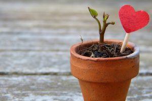 Proč Si Pořídit Growbox