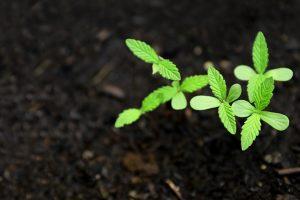 Co Můžete Pěstovat V Growboxu