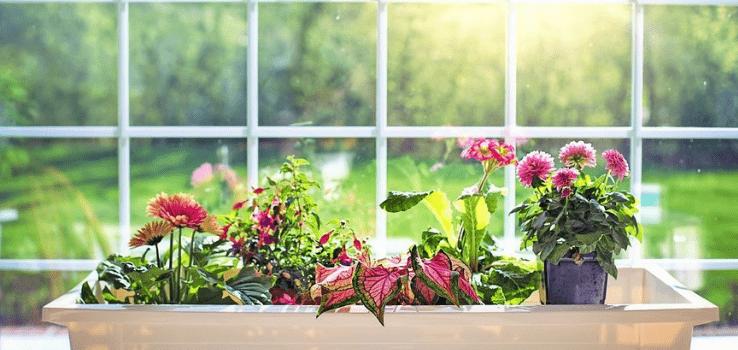 Vliv UV Záření Na Rostliny