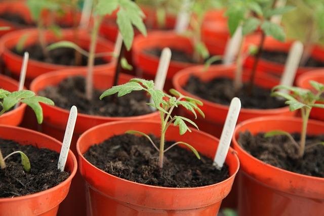 Rostliny A Otužování